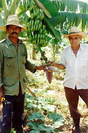 Kubai_kerteszkedok